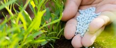 肥料の種類や三要素の成分、効果まとめ!肥料焼けの原因と対策は?