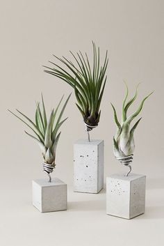 Luxury Home - Comforters, Blankets, Pillows Fun planters for air plants Cement Art, Concrete Crafts, Concrete Art, Concrete Projects, Concrete Design, Concrete Planters, Pacaya, Beton Design, Concrete Furniture