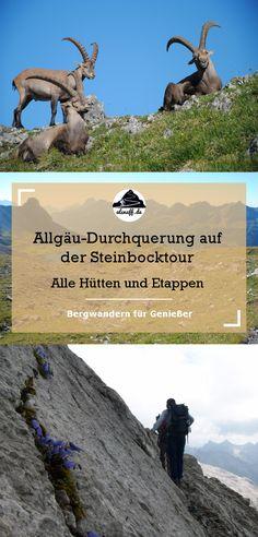 Durch die Allgäuer Alpen auf der Steinbocktour - Alle Hütten und Etappen #berge #hüttenwandern #hiking #outdoor #alpen