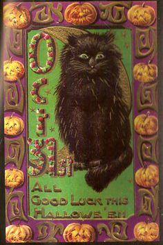 Black Long Hair Kitty