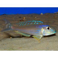 Glass Aquarium, Tropical Aquarium, Aquarium Ideas, Planted Aquarium, Tropical Fish, Aquariums, Victoria Lake, Lake Tanganyika, Fish Tales