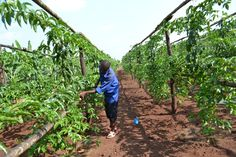 Growing Rwanda Out of Poverty - Forbes