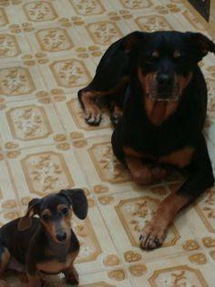 Ozzy e Moya
