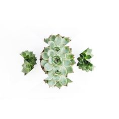 Graphic cactus #letsgoallbotanical