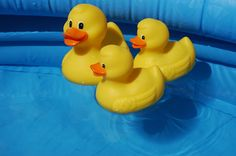 Duck Duck (Stock Photo By tatlici) [ID: 818644] - freeimages