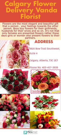 Order flowers online with same day flower delivery in calgary from vanda florist.provides fresh flowers for occasions like : wedding , birthday, christmas day, anniversary etc. plz Call us today: 403-457-3939. address: 3820 bow trail southwest, suite 4, calgary, alberta Christmas Flower Delivery, Same Day Flower Delivery, Buy Flowers, Fresh Flowers, Order Flowers Online, Calgary, Trail, Anniversary, Bow