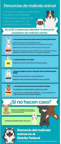 Denuncias de maltrato animal en la Ciudad de México