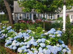 There are so many charming and classic Cape Cod homes to choose from. View this slideshow of just a few and imagine yourself enjoying your summer vacation here. Side Garden, Garden Beds, Free Landscape Design, Chatham Cape Cod, Cape Cod Vacation Rentals, Front Yard Landscaping, Landscaping Ideas, Backyard Ideas, Coastal Gardens