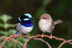 BioOrbis: Pássaros treinados