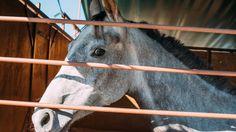 L'un des chevaux vendus au haras d'Uzès - Grande Semaine d'Uzès, 22e Finales nationales de jeunes chevaux d'endurance SHF.