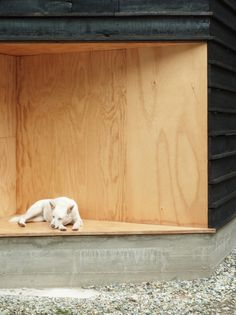 Wood and the Dog / StudioErrante Architetture