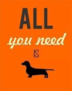 I think it should say - KEEP CALM AND WALK YOUR DACHSHUND!