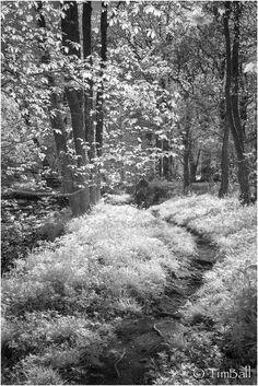 https://flic.kr/p/HwZUT8 | Spring Woodland Path IR | Brock Valley Infrared (830nm) | Photo by Tim Ball
