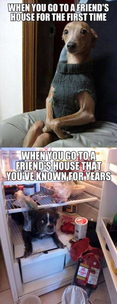 Really True LOL Funny Memes Hilarious Can't Stop Laughing 23 Wirklich wahr LOL Lustige Meme Hilarious Can't Stop Laughing 23 Funny Dog Memes, Funny Animal Memes, Cute Funny Animals, Funny Relatable Memes, Funny Animal Pictures, Funny Cute, The Funny, Funny Dogs, Memes Humor