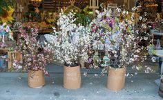 Beautiful dogwood branches in the market this season!