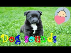 Dog sounds | Dog barking | Animal sounds for children to learn - YouTube