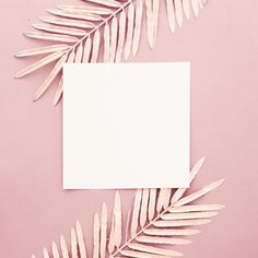 Pink palm leaves with blank frame on pink background Free Photo Framed Wallpaper, Flower Background Wallpaper, Graphic Wallpaper, Pink Wallpaper Iphone, Background Images, Aztec Wallpaper, Pattern Background, Screen Wallpaper, Blank Background