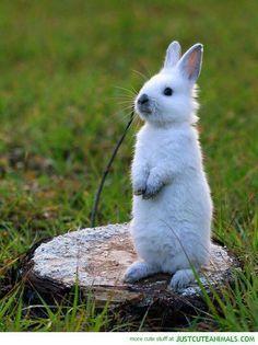 "White Rabbit Standing up ""Kit"""