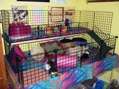 Amazing Guinea Pig Cages | Guinea Pig Hub