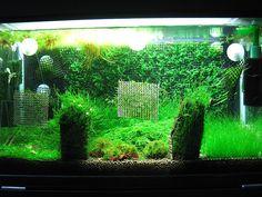 ... Aquarium Setup on Pinterest Aquarium, Planted aquarium and Tanks