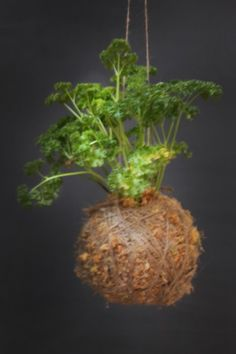 Mister Moss _Parsley Natural