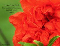 Psalm 8:9 www.Facebook.com/InspirationalCreationsbyDebForster