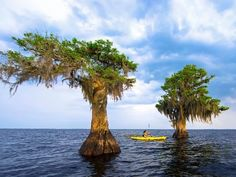 10 Things To Do for Nature Lovers in Indian River County, FL - TripsToDiscover Indian River Lagoon, Airboat Rides, Indian River County, Island Park, Cypress Trees, Old Florida, Vero Beach, Water Lilies, The Great Outdoors