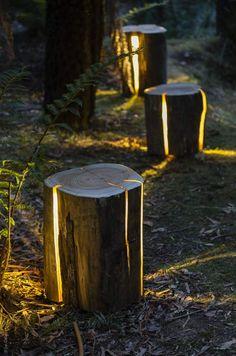 tronc d'arbre fendu et illuminé