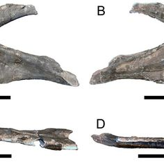Torvosaurus gurneyi : Découverte du plus grand dinosaure carnivore d'Europe - http://www.appy-geek.com/Web/ArticleWeb.aspx?regionid=2&articleid=20017261
