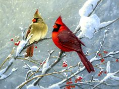 images of cardinals in winter | Winter Cardinals by Jim Hautman