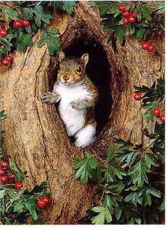 Squirrels  I think this should win the award of the Best Pinterst Entry Way,  agree??