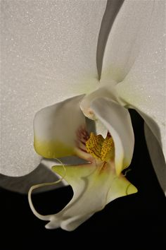 """""""When you take a flower in your hand and really look at it, it's your world for the moment."""" ~ Georgia O'Keeffe Georgia O'keefe Art, Georgia On My Mind, Alfred Stieglitz, Marc Chagall, New Mexico, O Keeffe, Photo D Art, New York Art, Art Institute Of Chicago"""