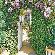 A pergola covered in wisteria and ivy offers a striking entryway. The towering arch creates a tunnel, offering the illusion that the yard is much larger than it actually is. Bright containers against the house help draw you in.