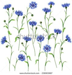 Would get maybe a single flower that looks like this! Image from http://thumb101.shutterstock.com/display_pic_with_logo/1712626/236903887/stock-vector-blue-cornflowers-set-isolated-on-white-236903887.jpg.