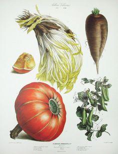 Vilmorin Fruit & Vegetable Prints - for kitchen/dining room