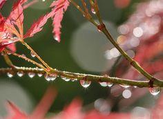 Gocce .... di Natale   da Michele Zanetti su Flickr {collected by Via Optimae, www.viaoptimae.com}