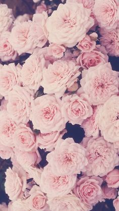 pink roses iphone wallpaper wallpapers backgrounds
