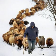 A place for pictures and photographs. Cute Wild Animals, Farm Animals, Animals And Pets, Sheep Farm, Sheep And Lamb, Lord Is My Shepherd, Winter Photos, Winter Scenes, Beautiful Horses
