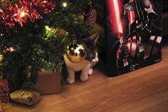 christmas kitty!