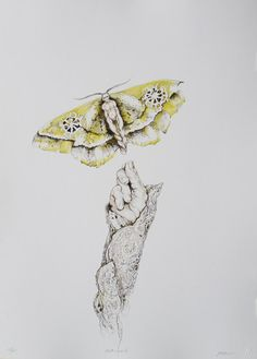 Judy Mason, judith Mason, Mason lithographs, prints by judith mason South African Artists, Beautiful Drawings, Graphic Illustration, Illustrations, Traditional Art, Zine, Insects, Prints, Graphite