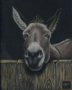 1000+ images about FOR THE LOVE OF DONKEY'S, MINI'S, MULES AND ...