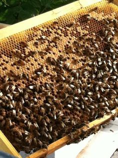 Want to start keeping bees?  Here are some great links.