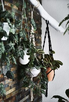 Miriam has used branches on a wall to hang her collection of plants in macramé plant pot holders. Click the link to find more inspiration from plant-lover Miriam's home in Switzerland. Small Space Interior Design, Interior Design Living Room, Green Plants, Cactus Plants, Diy Plante, Indoor Plants Online, White Branches, Decoration Plante, Plant Needs