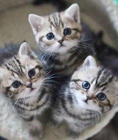 So cute!!!! Kittens warm my heart