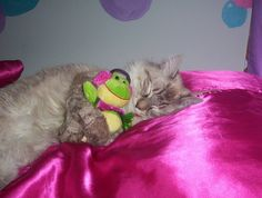"""Sarah will look at this and say, """"Awwwww"""", then try to make her kitty go to sleep with a stuffed animal!"""