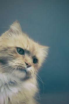 Free download of this photo: https://www.pexels.com/photo/orange-cat-53881/ #animal #pet #cute