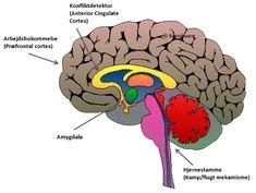 stress hjerne