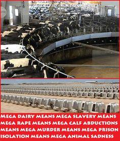 mega dairy