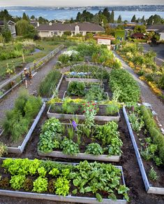 What used to be a grassy suburban slope is now a food factory, complete with a water catchment system and diverse ecosystems. Jessi Bloom designed thi… - All For Garden Sloped Garden, Garden Beds, Garden Care, Clover Lawn, Parque Linear, Water Catchment, Pot Jardin, Pot Plante, Vegetable Garden Design