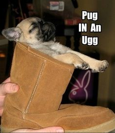 just for you @Kelsey Myers Myers Myers Myers Myers Burnett (25 Hilarious Pug Memes)